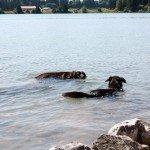 Hunde im Lechsee