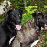 Hunde im Chiemgau